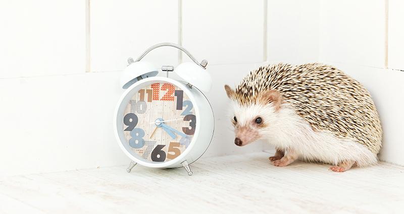 子どもは時計が見れなくても時間を把握している